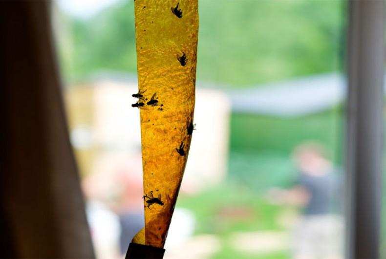 cara-mengusir-lalat-dari-rumah-highlight
