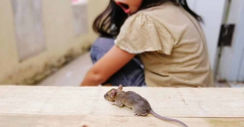 gigit-tikus