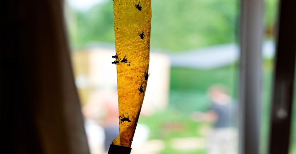 cara-mengusir-lalat-dari-rumah